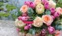 catalogue au nom de la rose du 2020-03-11...