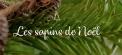 image botanic du moment - selection sapins...
