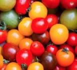 assortiment de tomates cerises rondes et allongees