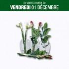 bouquet damaryllis