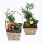 composition de 4 plantes