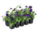 photo Lot de 10 plantes fleuries