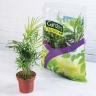 lot de 3 plantes vertes en sac