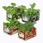 lot de 6 plants