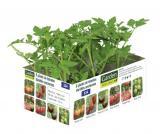 lot de 6 plants de tomates anciennes