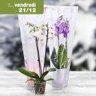 orchideacutee en sac cadeau