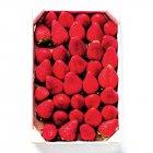 fraises rondes