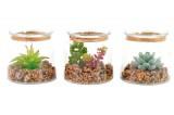 plante succulente artificielle
