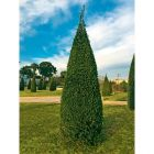 olivier pyramide