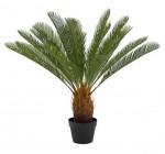 cycas palmier vert