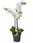 orchid orchidee en pot blanc