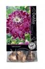bulbes de begonias ou de fleurs automne premium