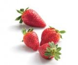 fraises gariguette