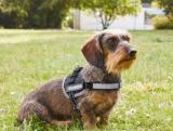photo Harnais pour chien