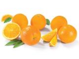 photo Oranges Bio