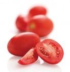 tomate allongee torino