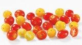 tomate cerise mix