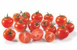 tomates rondes grappe