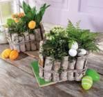 arrangement de paques 3 plantes