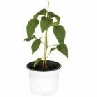 plant de leacutegumes