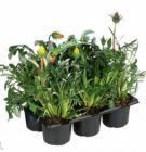 photo Plantes vivaces