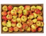 pommes bicolores fuji