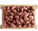 pommes de terre de consommation franceline