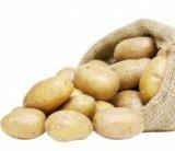 pommes de terre de consommation malou