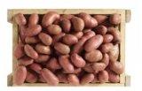 pommes de terre de consommation cherie