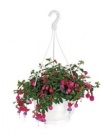 photo Suspension de plante fleurie