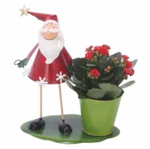 arrangement 1 plante